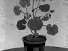 Josip Generalic, 1959, Flowers in a pot, oil on wood