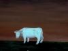 Ivan Generalic, 1974, White cow, oil on glass