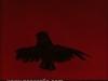 Ivan Generalic, 1975, Black owl, oil on glass